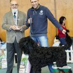 Black Balkan Lion Igor Knyaz Rusi